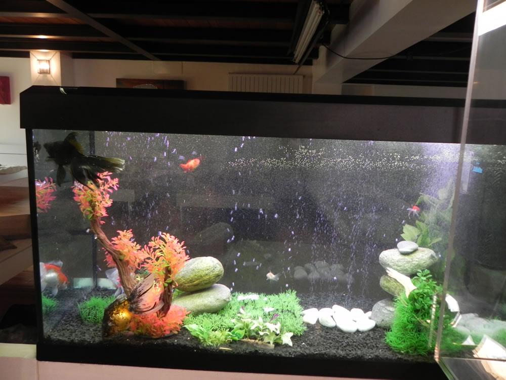Noleggio acquari milano acquario noleggio per pubblicit for Acquario per tartarughe usato